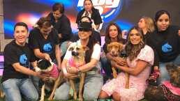 Yadhira Carrillo reaparece en 'Hoy' y pone en adopción a sus 120 perritos
