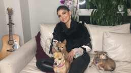 Ana Bárbara describe la personalidad de sus cuatro mascotas y asegura que en su casa 'son muy queridas'