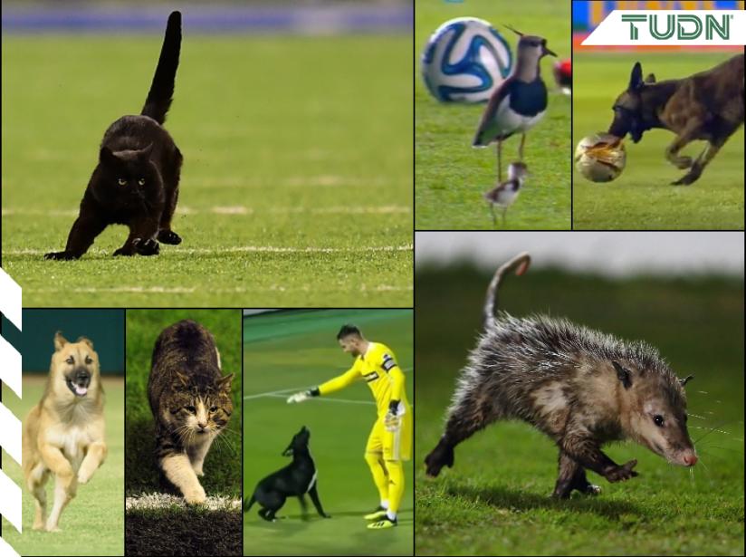 animales en la cancha MX.png