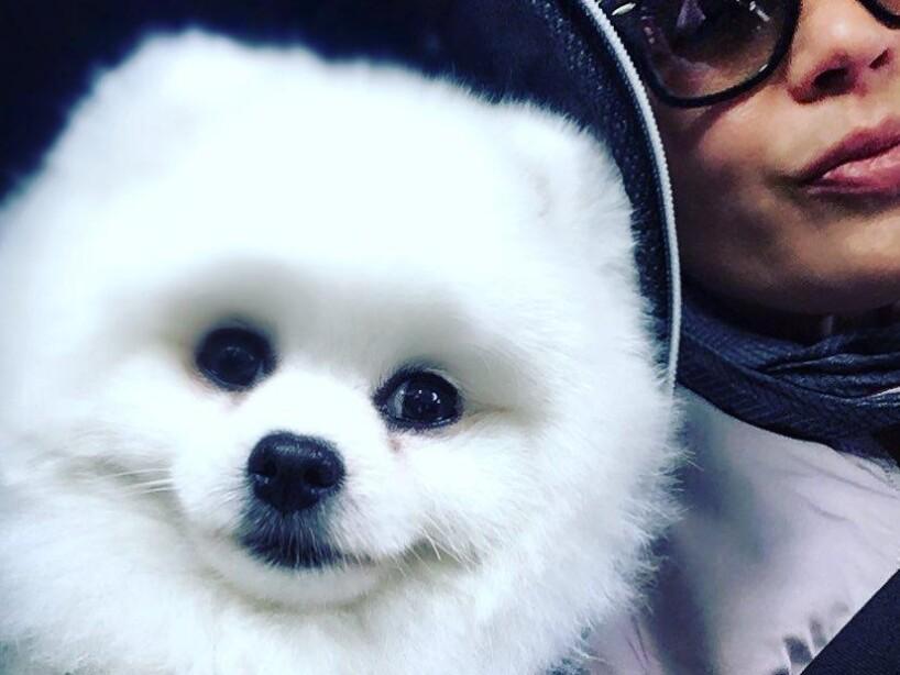 Presume tus perros a Montserrat Oliver y Yolanda Andrade con el Hashtag #MiMascotaEs