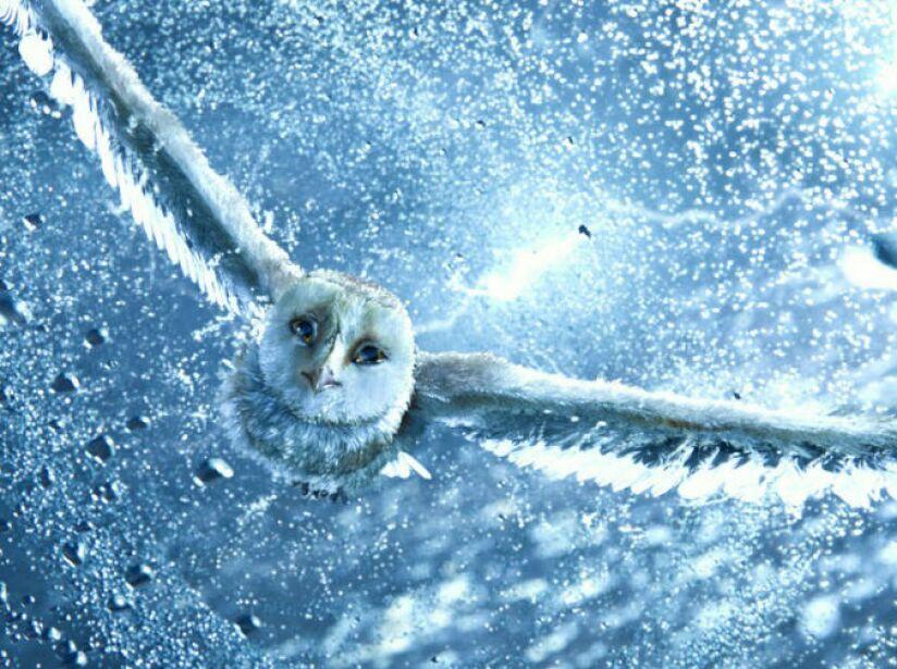 En 2010 estrenó GaHoole: la Leyenda de los Guardianes en 3D, un filme de fantasía que recrea las aventuras de un pequeño búho.