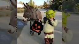 """""""Amigos debes tener"""": Niño disfrazado de Shrek pide calaverita con un burro real"""