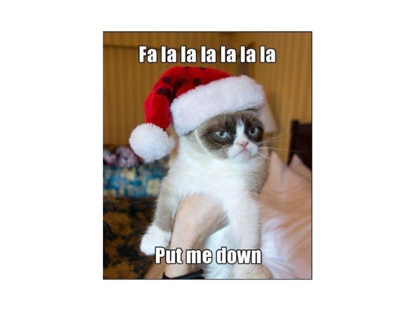 Los memes que con su mal humor, Grumpy Cat inspiró
