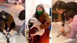 Ana Bárbara no se aguantó las ganas y rescató a una perrita de la calle para quedarse con ella