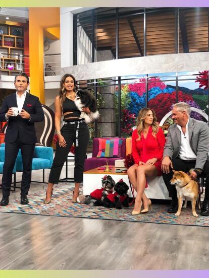 Andrea Escalola, Galilea Montijo y el resto de los conductores del programa Hoy son amantes de las mascotas. ¡Conoce a sus fieles amigos en estas fotos!