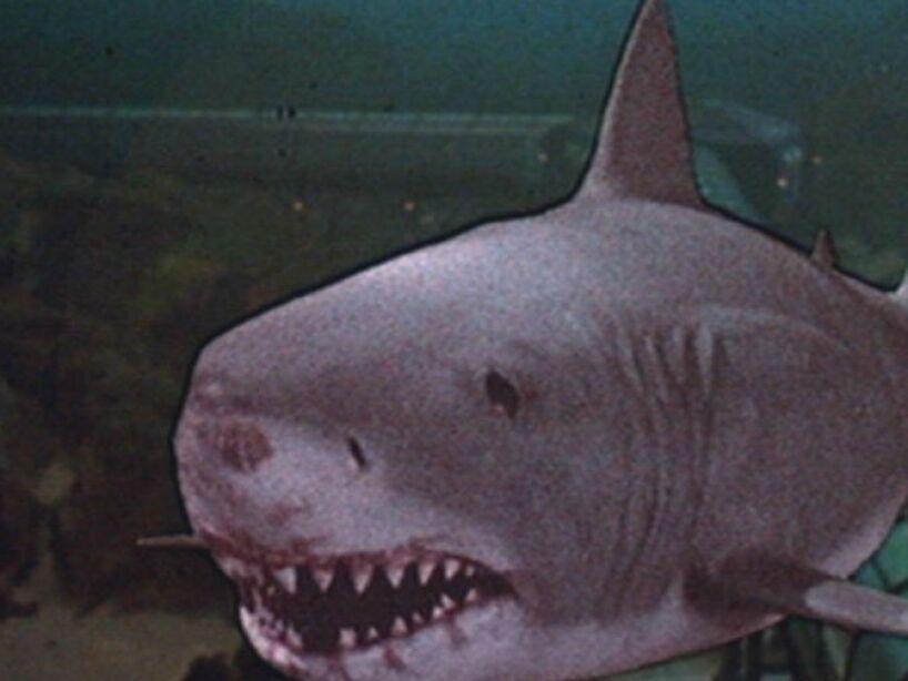 En 1983 los tiburones llegaron al cine en 3D, gracias a Jaws-3D, no hace falta decir que los efectos no fueron los mejores.