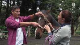Más mascotas que humanos: ¿Sabías que puedes superar dificultades emocionales al tener contacto con un caballo?